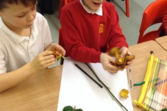 Year 2 Investigating plants