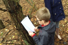 Year 5 Forest Schools