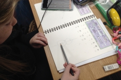 Year 5 Insect Sketching