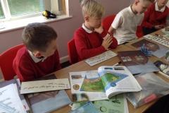 Year 5 Investigating Deforestation